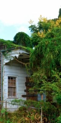 jnolaovergrownhouse