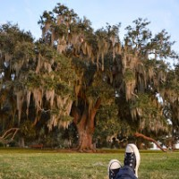 My feet and the most amazing oak tree.